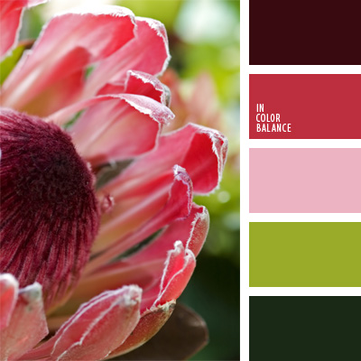 Paleta kolorów nr 170