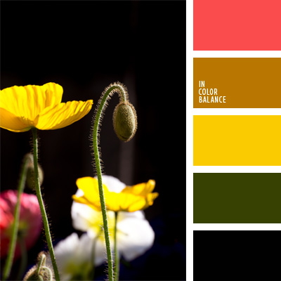 Paleta kolorów nr 58